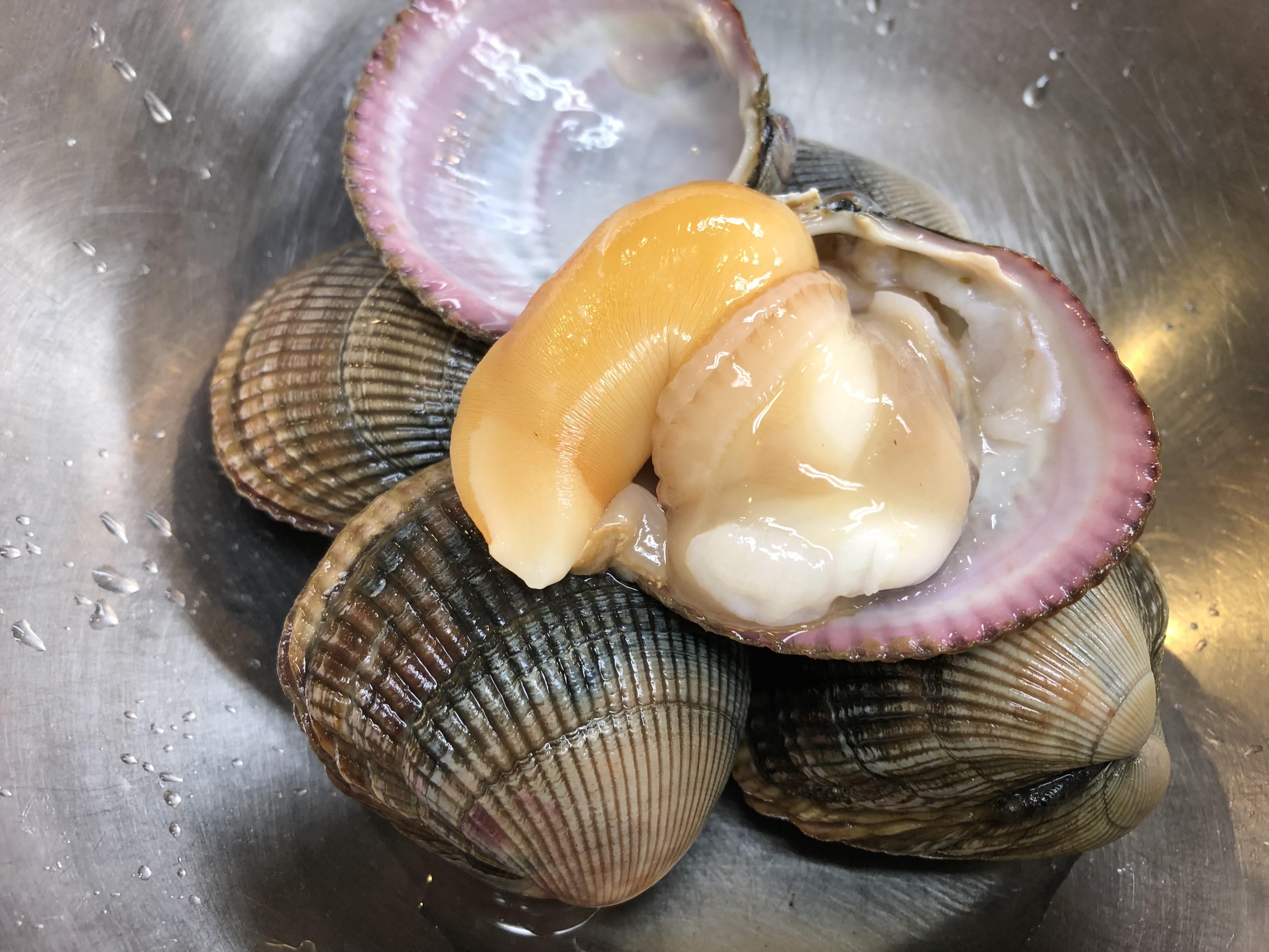 イシカゲ貝